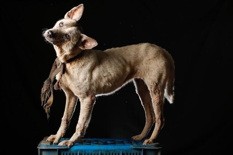 病院の外で看護師に助けられたこの犬は「看護師」と名付けられ、保護施設の外で暮らしており、とても優秀な番犬だという。ロステケスで8月撮影(2016年 ロイター/CARLOS GARCIA RAWLINS)