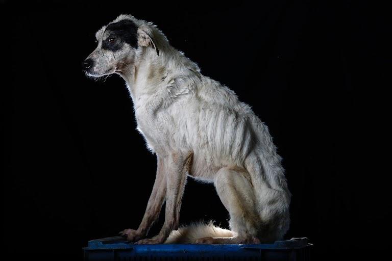 顔に黒い点があることから「シミ」と名付けられたこの犬は好戦的で、食事中は誰も近づけなかった。撮影の翌週に亡くなった。ロステケスで8月撮影(2016年 ロイター/CARLOS GARCIA RAWLINS)