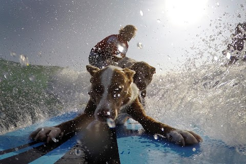 Surf's up: woof!