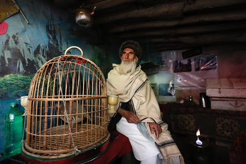 Wings of joy: Kabul's bird market
