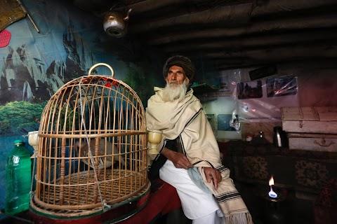 Wings of joy: Kabul's bird market
