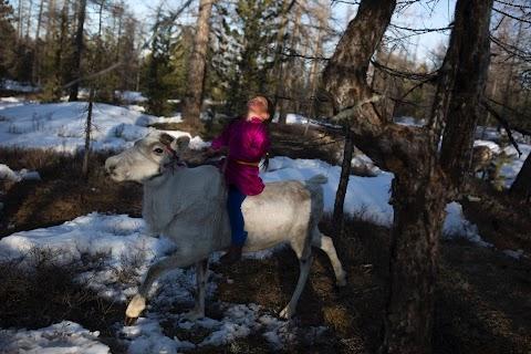 Mongolia's reindeer herders fear lost identity