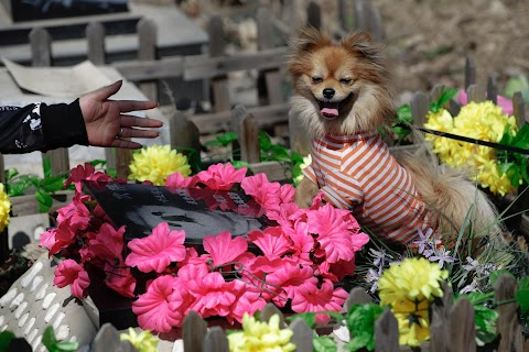 China's pet cemetery