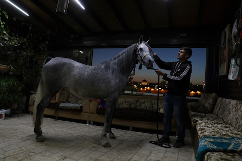 Palestinians in East Jerusalem cherish their horses