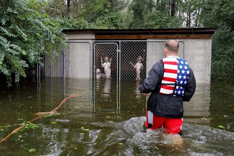 Dogs rescued as floodwater rose