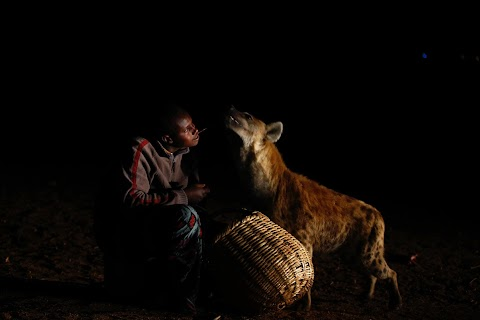Hyenas spark admiration, not fear, in Ethiopia's Harar city