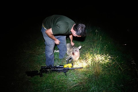 A night on the kangaroo cull