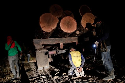 Fighting fire with fire, Amazon 'forest guardians' stalk loggers