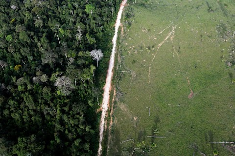Cutting into the Amazon