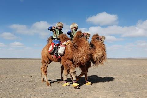 Mongolia's camel festival