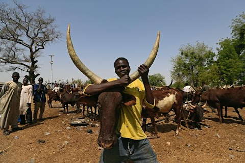 Herders suffer in fight against Boko Haram