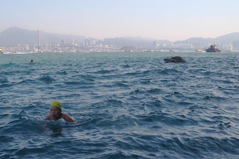 Hardy Hong Kong swimmers brave busy harbour