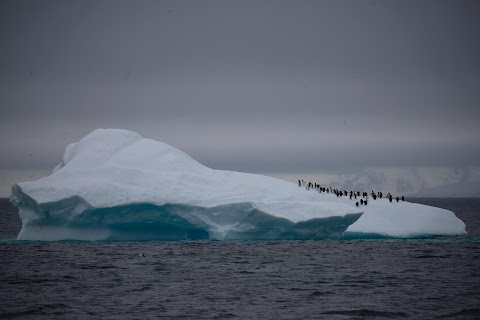 On board the Antarctic expedition that reveals dramatic penguin decline