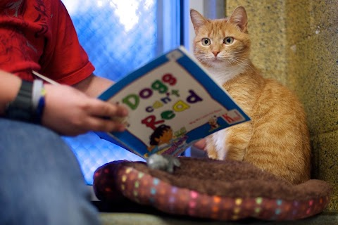 Kids, cats and education