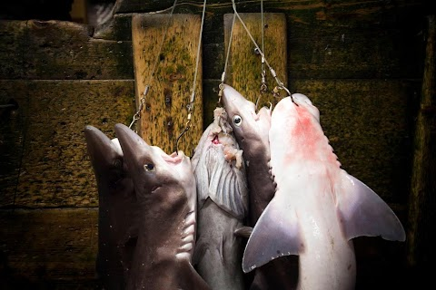 Fishing for fins