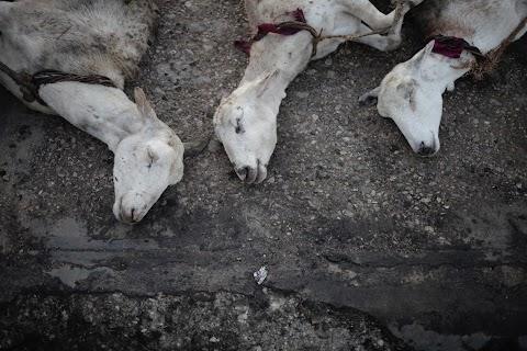 Haiti slaughterhouse
