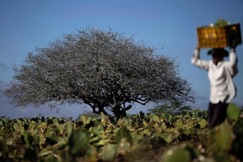 Brazil\u0027s race to save drought-hit city