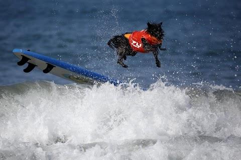 Doggy surfer dudes