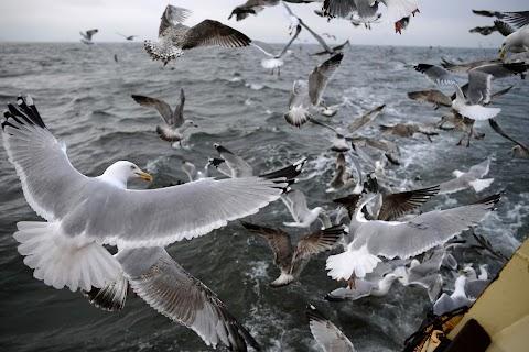 Fishermen's struggle