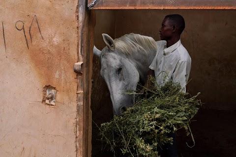 Khartoum's Equestrian Club struggles amid Sudan upheaval