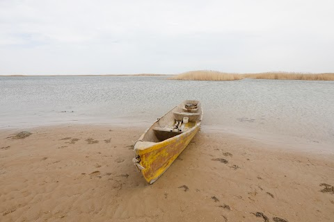 Aral Sea: big fish is back in small pond