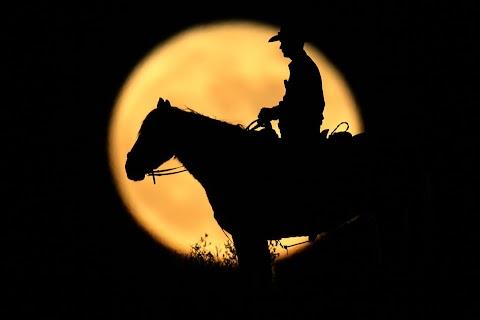 Wild horse border patrol
