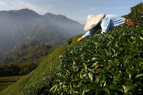 Climate-fuelled drought forces Taiwan tea farmer in search of water