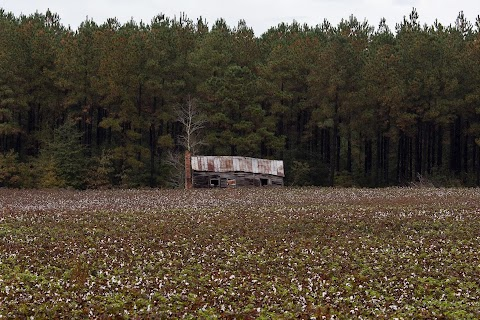 "The Legacy of ""King Cotton"""