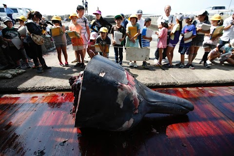 Whaling lessons in Japan