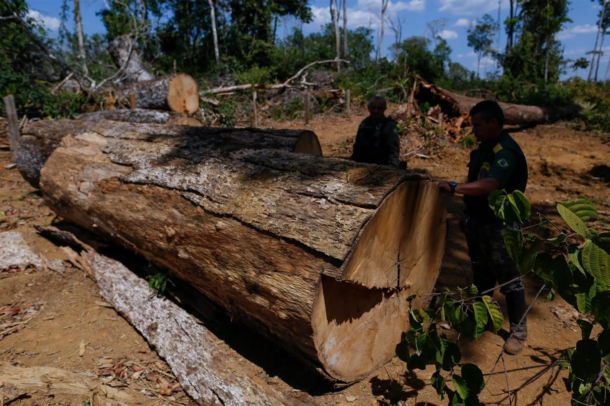 tropical deforestation Tropical deforestation also affects the local climate of an area by reducing the evaporative cooling that takes place from both soil and plant life as trees and.