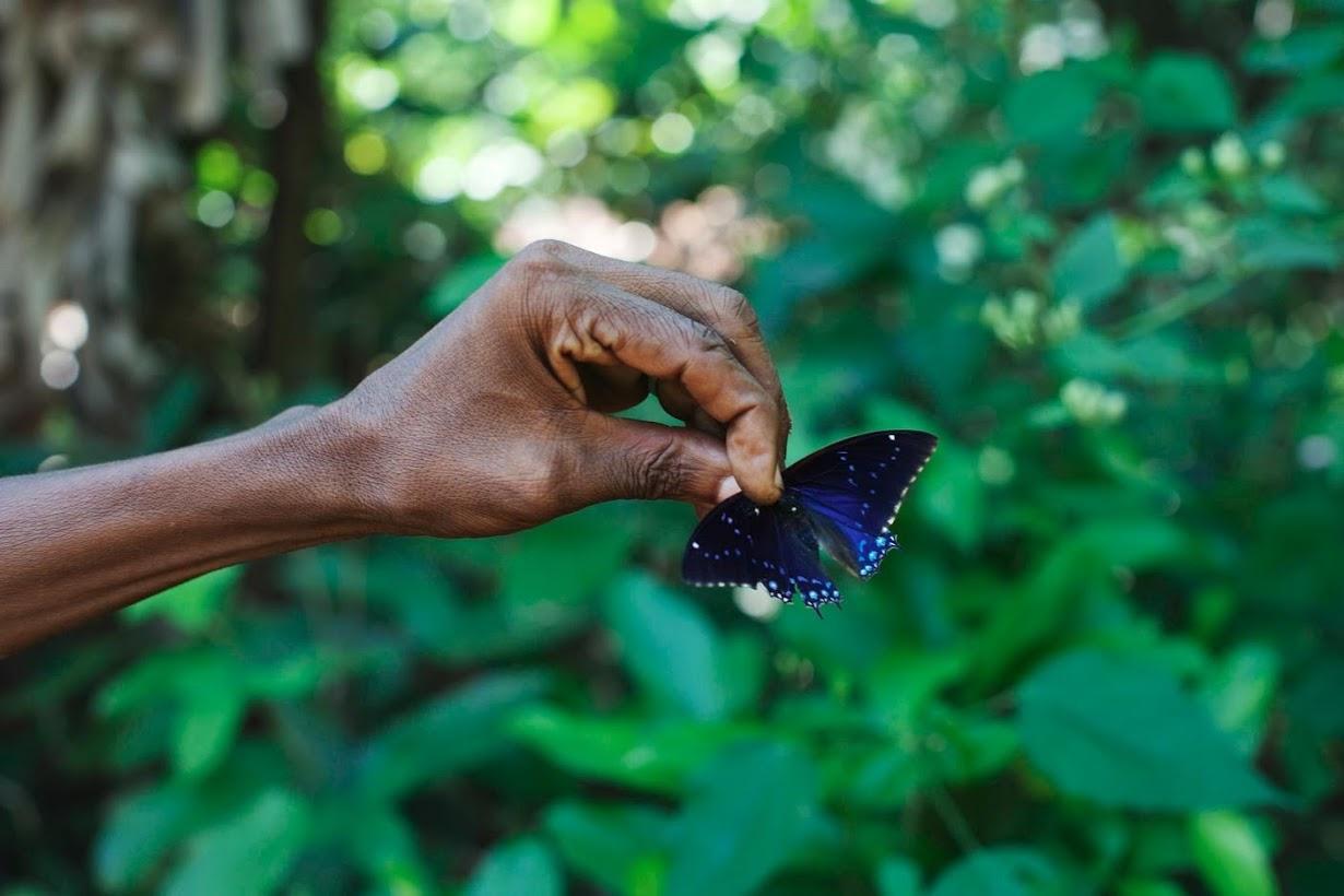 им ловит бабочек и рыбок