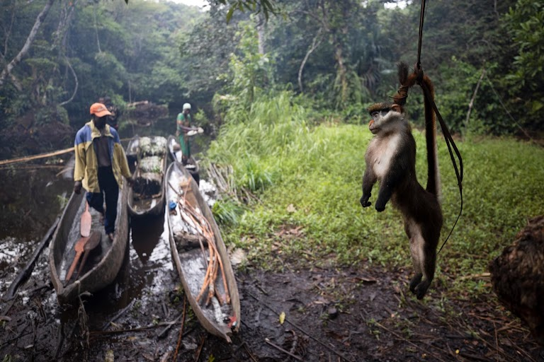 In Congo, part-time hunters boost income with bushmeat by Thomas Nicolon
