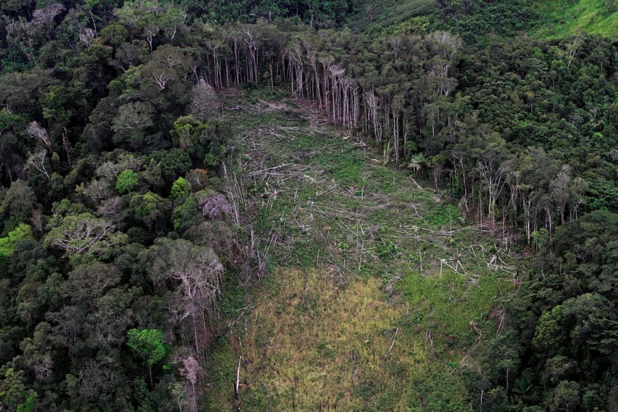 deforestation in the amazon rainforest essay Free essay: brazil deforestation has been a global issue for the past decades in the amazon rainforest, there have been many miles of trees cut down by.