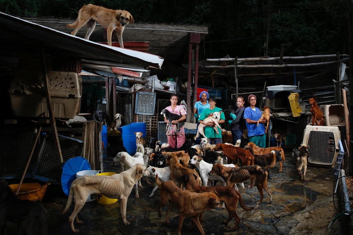 ベネズエラ北部ロステケスにある犬の保護施設で8月撮影(2016年 ロイター/CARLOS GARCIA RAWLINS)